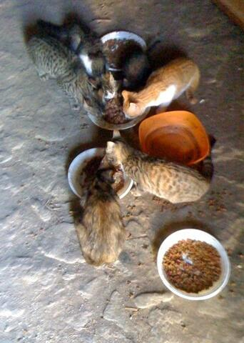 Feeding the cats
